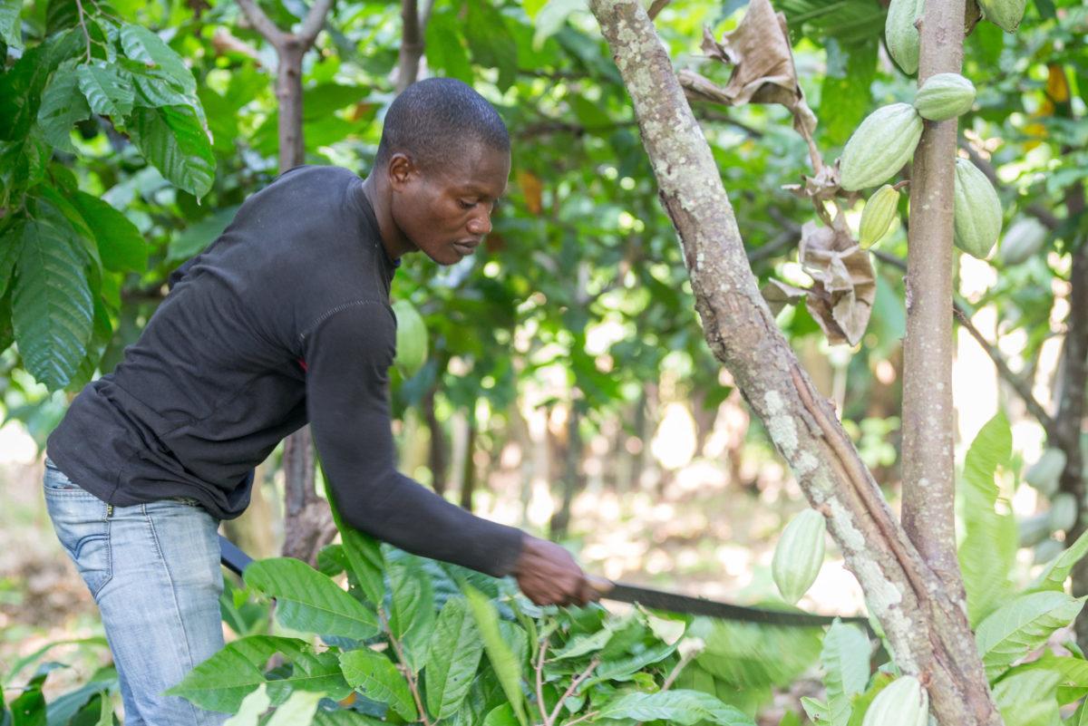 Kakaoanbau Elfenbeinküste Nachhaltigkeit