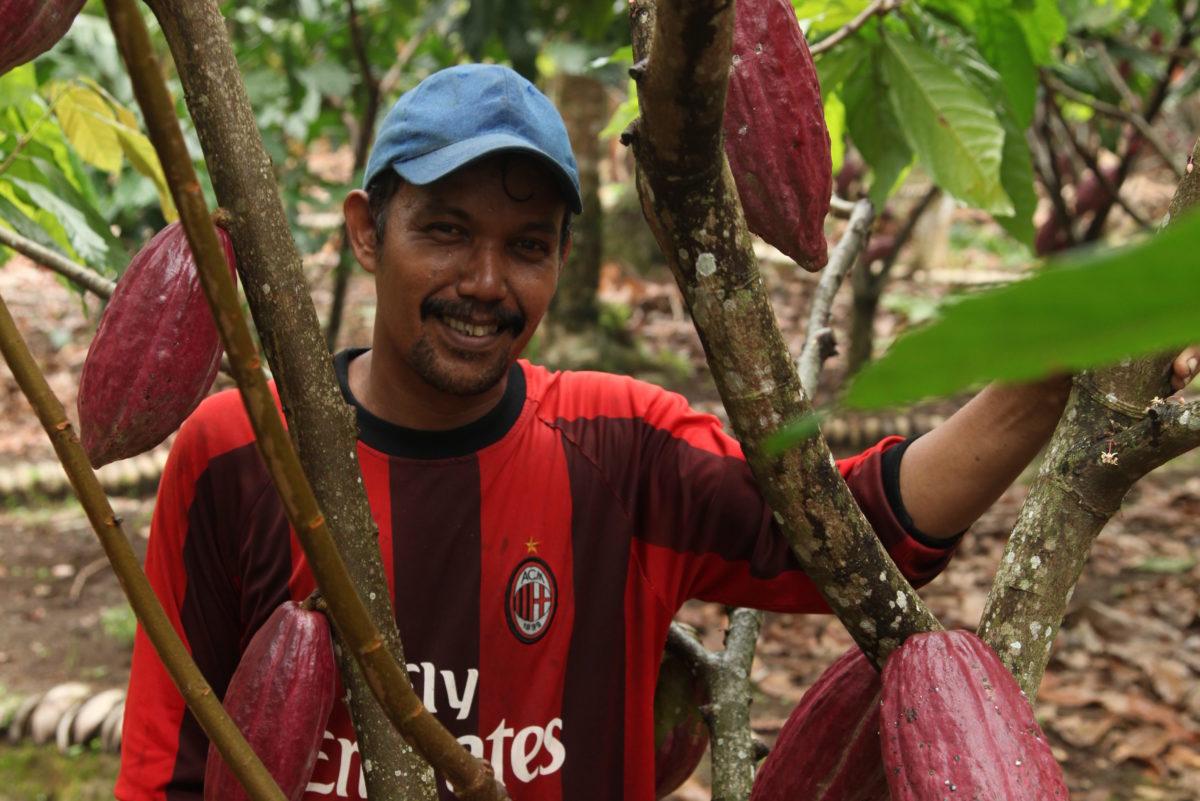 Kakaoanbau Sumatra Nachhaltigkeit