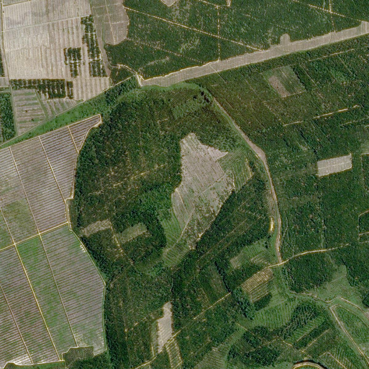 Nestlé setzt Satelliten-Monitoring gegen die Abholzung des Regenwalds ein.